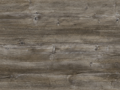 2057-М-Сосна-Пандероса-Поры-дерева-1-группа
